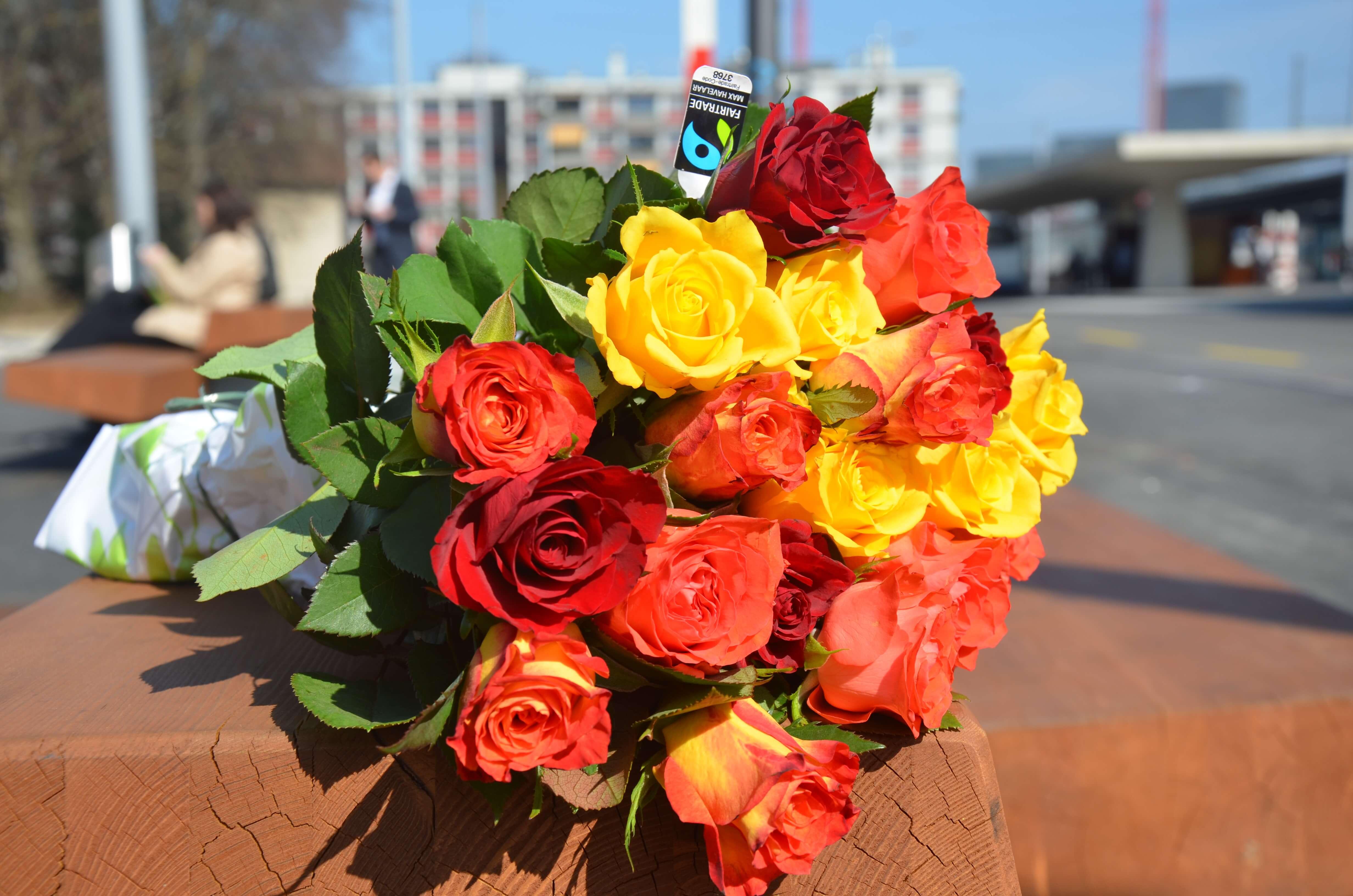 Giornata delle rose 2018