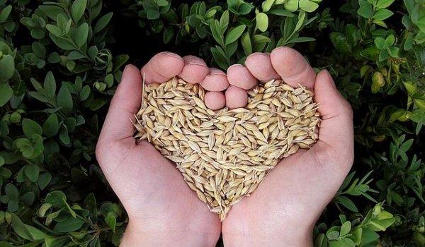 Herz Saatgut Fasten